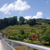 ふれあい橋から見える花の斜面 (6月撮影)