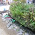 用水路ではラムネやスイカも冷やしています。