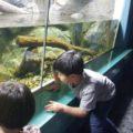 さいたま水族館 川魚を見学