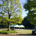 大きな芝生広場