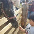 馬に餌もあげたり触れるよ!
