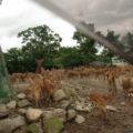 どのサファリパークよりも近くに動物がいるよ