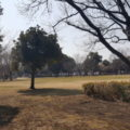 芝生広場 冬場の写真