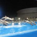 夜のイルカショー