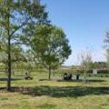 水族館が入っている羽生水郷公園 芝生広場