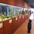 川の生き物が展示