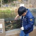魚へ餌やり