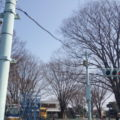 交通公園は信号もあるよ