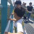 橋の上からぽ~い 綺麗な花が咲きますように